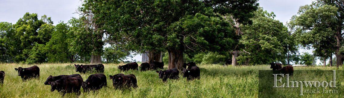 Organic, Grass-Fed Beef