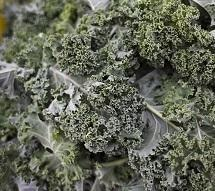 Kale, Curly