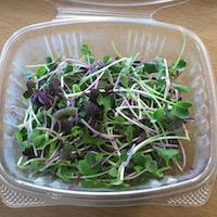 Microgreens, Spicy