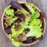 Lettuce, Mixed Salad