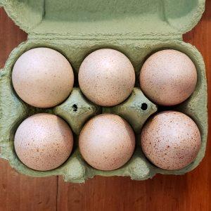 Eggs, Turkey