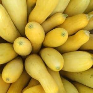 Squash, Yellow Squash
