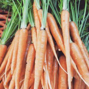 organic carrots from Elmwood Stock Farm