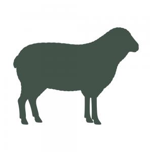 icon-lamb
